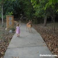 Night_Safari_Walking_Zone_34