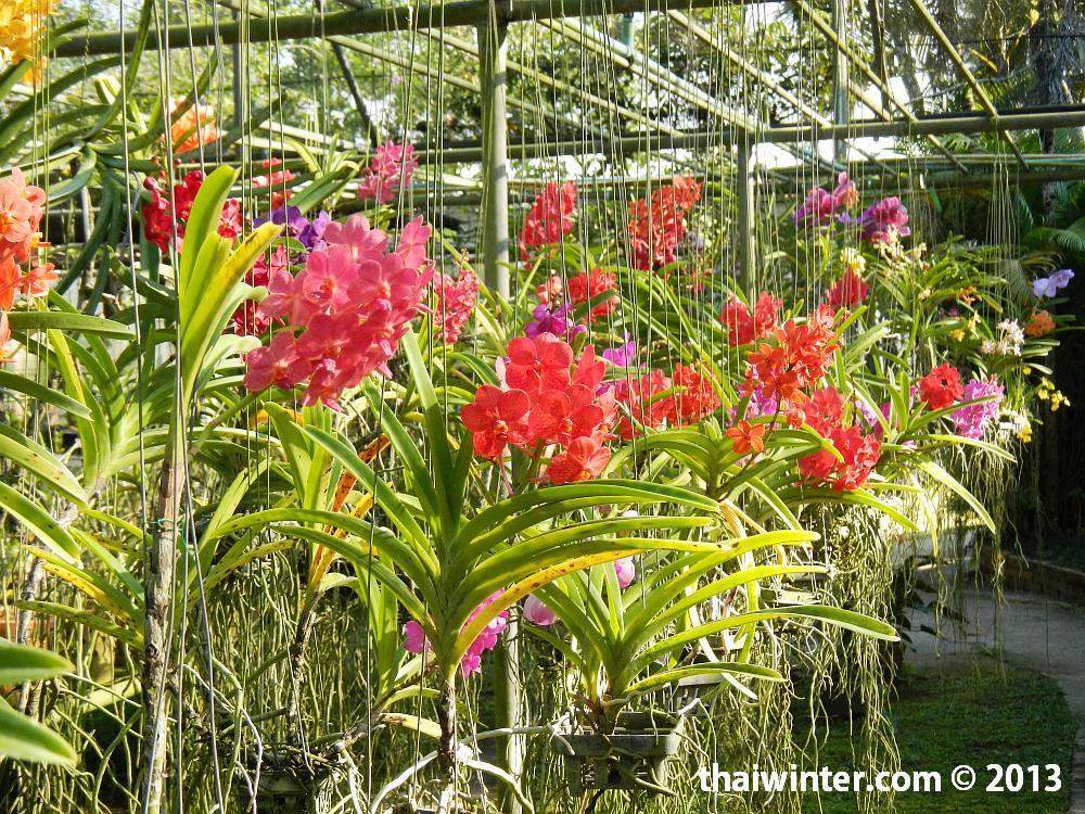 На Ферме Орхидей в Чианг Мае