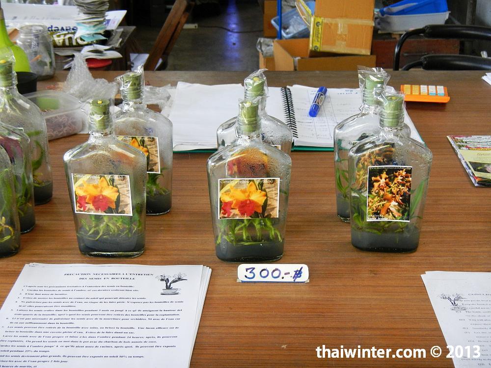 Саженцы орхидей на продажу