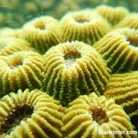 Underwater_04