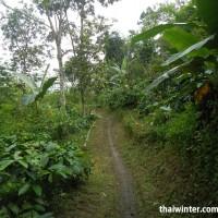Кофейная дорожка до второго порога водопада Melanting