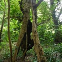 Странное дерево по дороге
