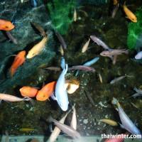 Siam Ocean World в Бангкоке