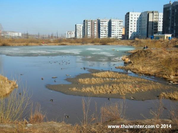 Весна на ул. Вильского, озеро с утками