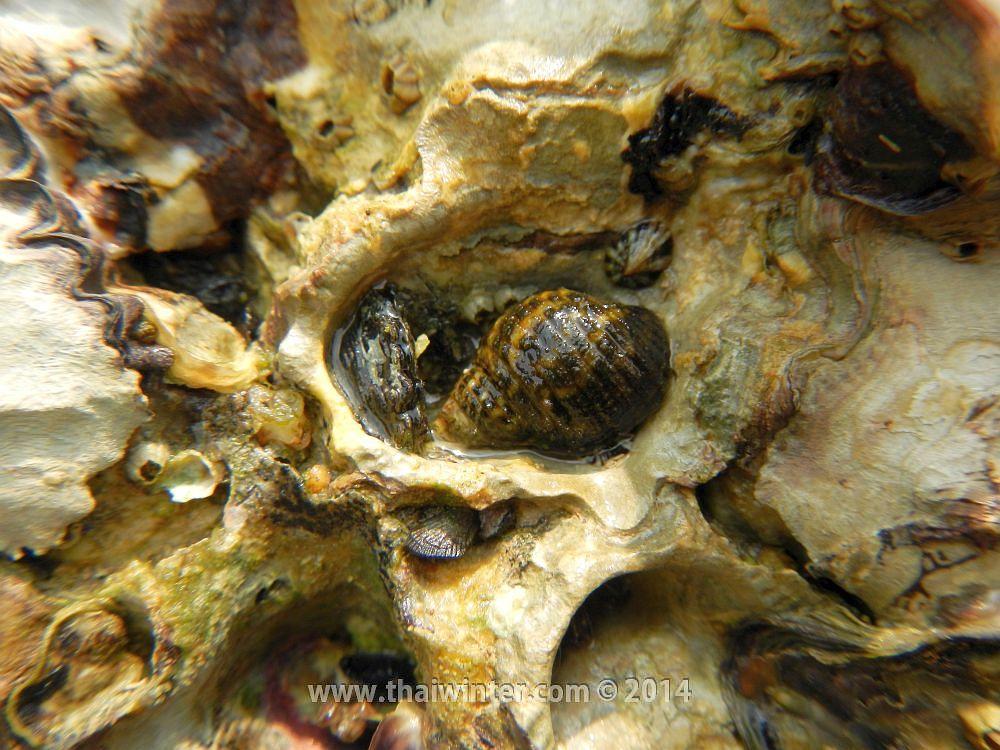 Живность на пляже Sunset Beach в Паттайе