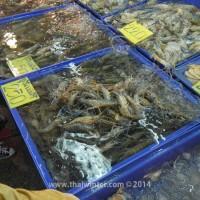 fish_market_08