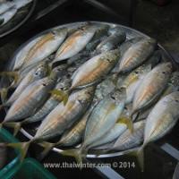 fish_market_12