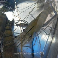 fish_market_17
