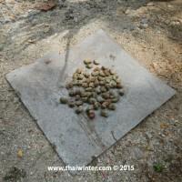 cashew_04-jpg