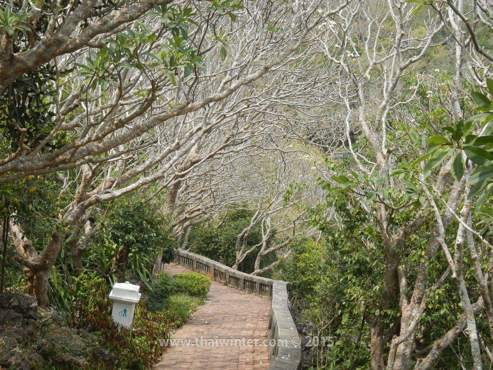 Автопутешествие в Пхетчабури из Хуахина, лес плюмерий