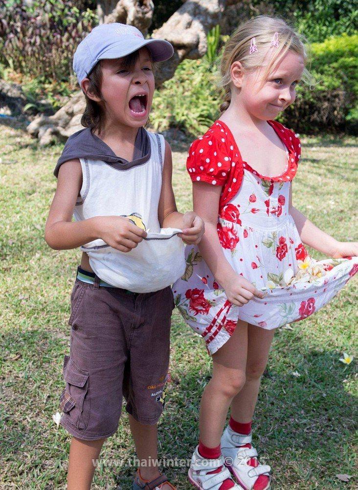 Дети насобирали цветков плюмерий