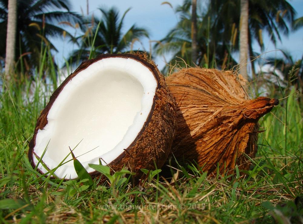 Тайские старые кокосы