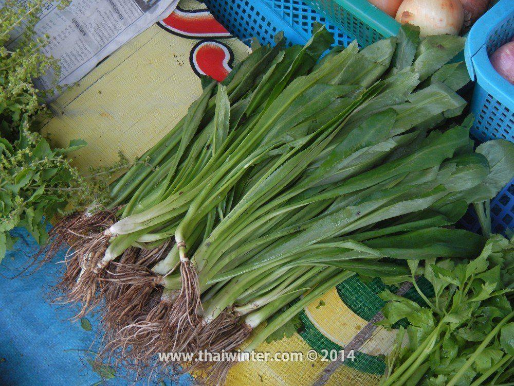 Эрингиум пахучий в Таиланде