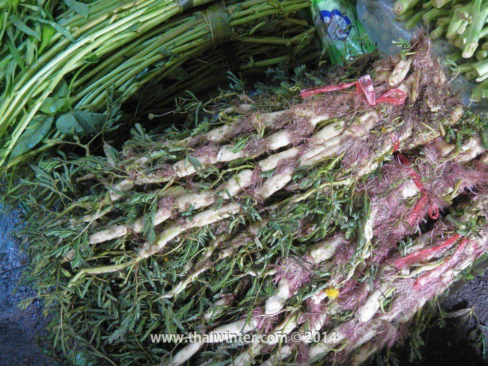 Водяная мимоза в Таиланде