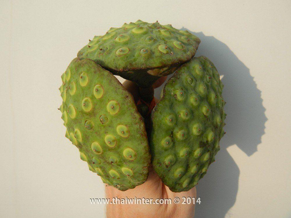 Семена лотоса в Таиланде