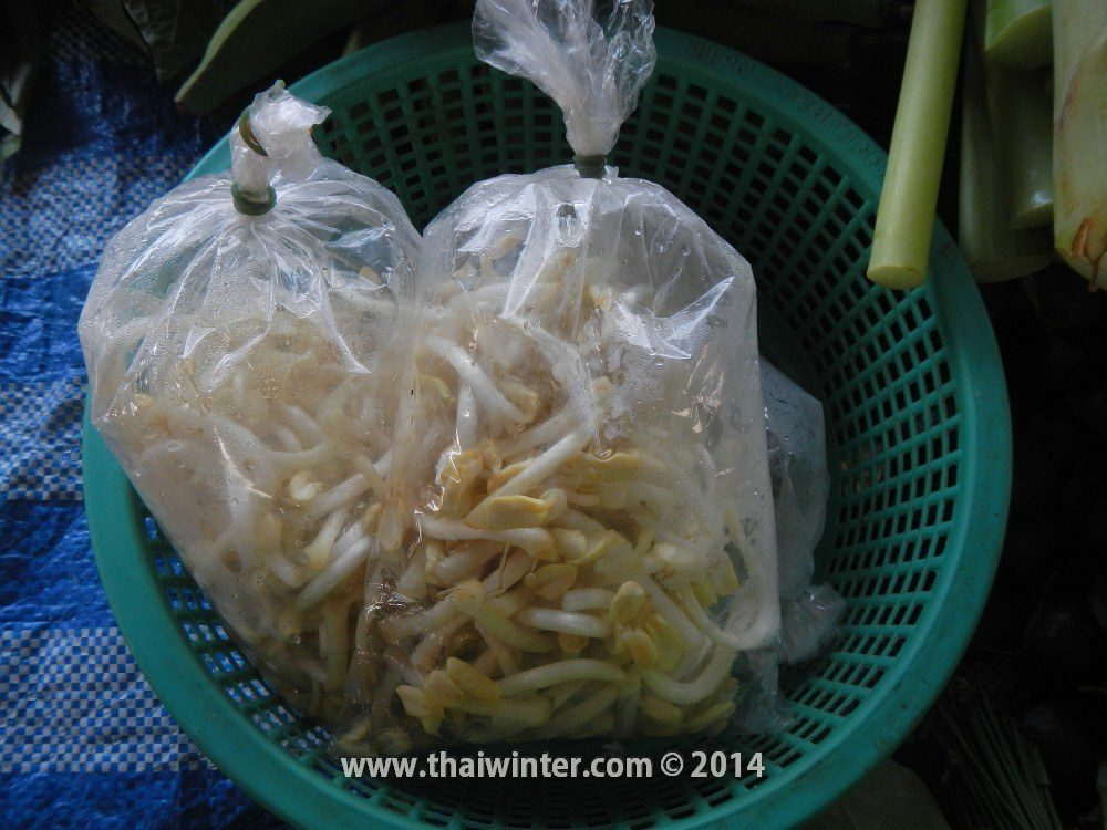 Проростки арахиса в Таиланде