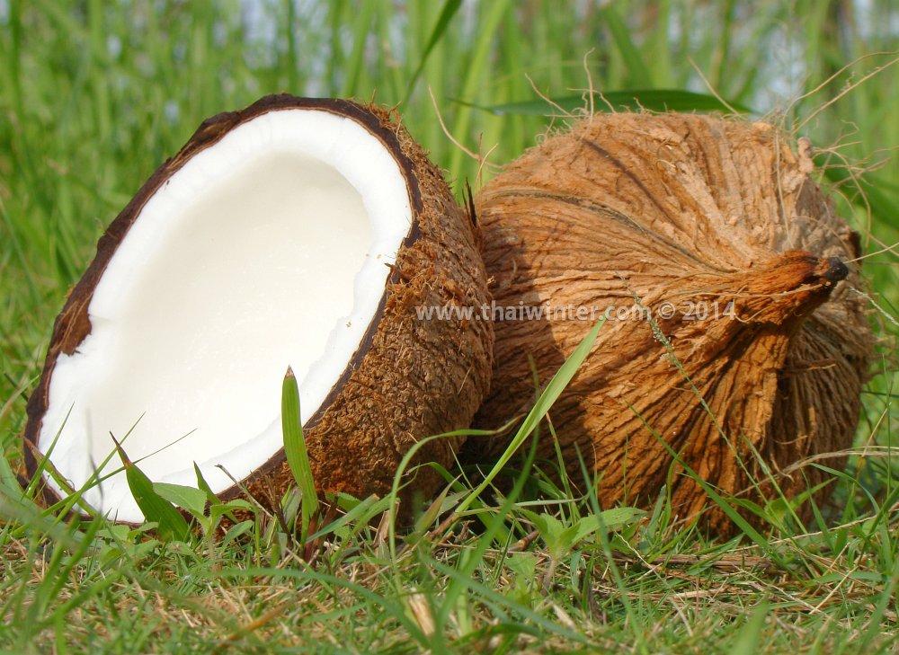 старый тайский кокос - Old Coconut