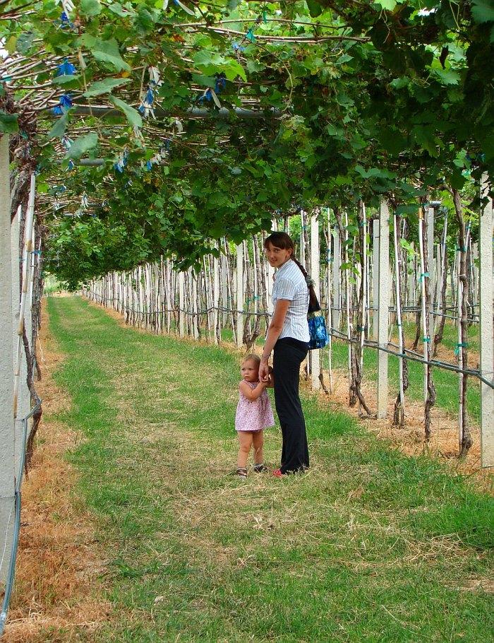 Василиса с Жанной на тайских виноградниках | Зима в Таиланде