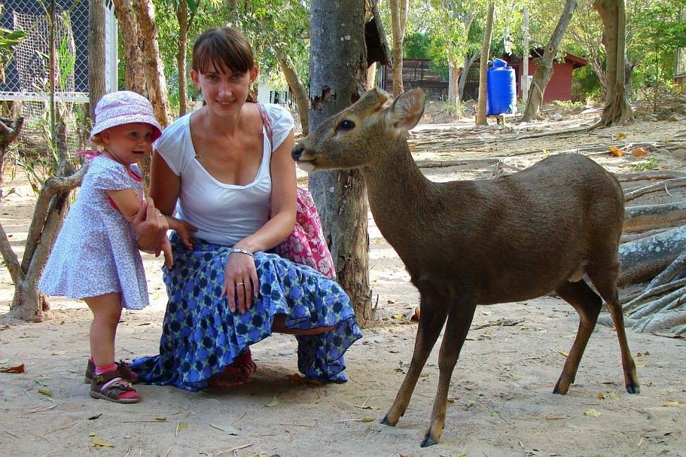 Кормим оленя в зоопарке | Зима в Таиланде