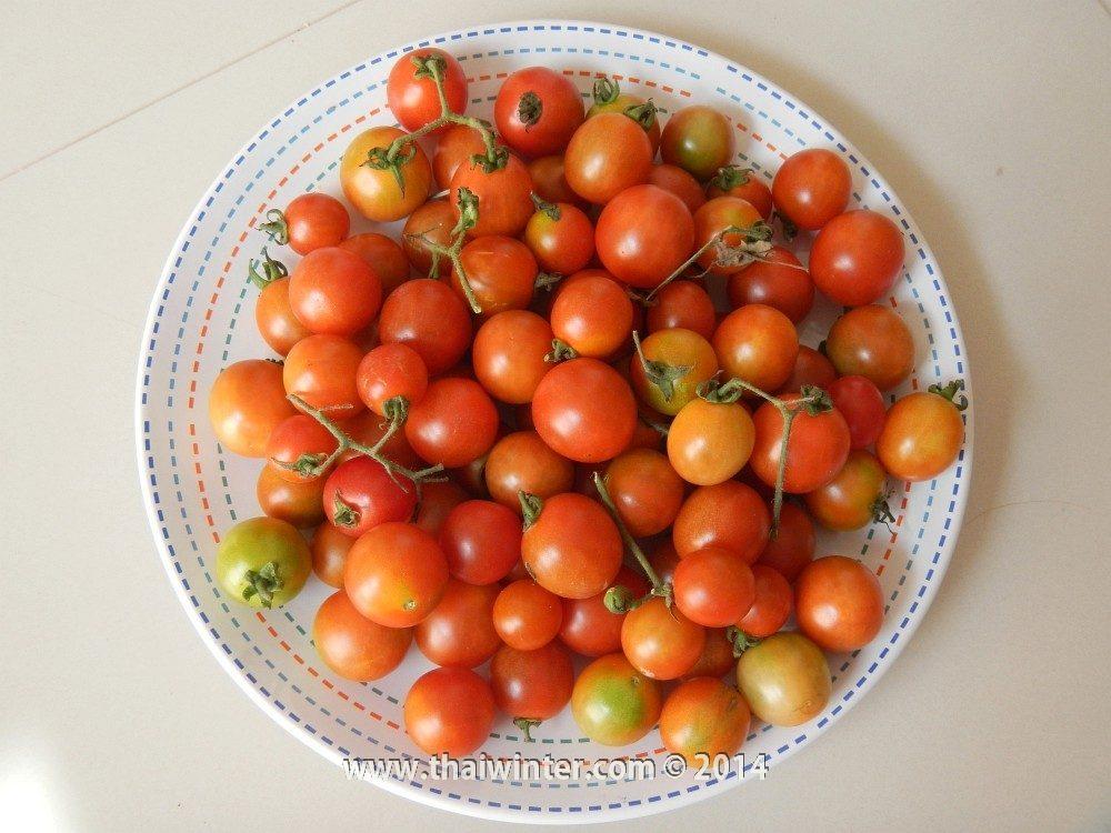 Маленькие тайские помидоры