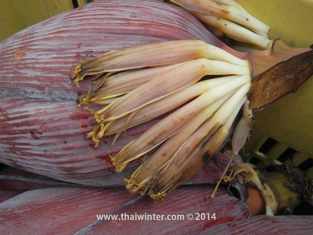 Цветки бананов в Таиланде
