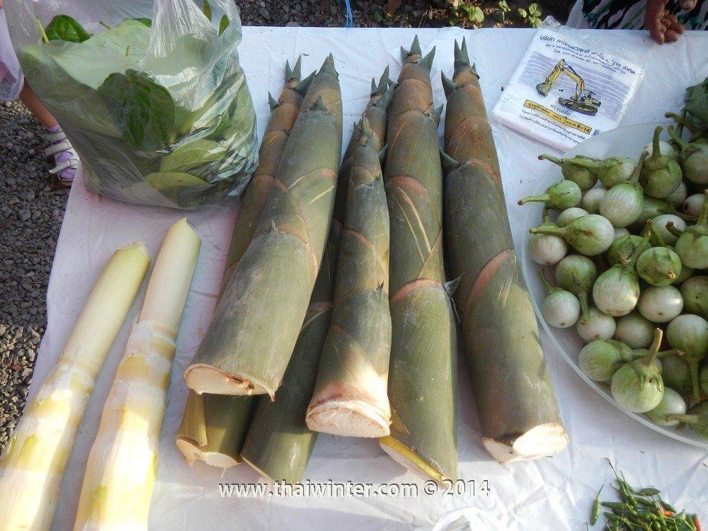 Молодые побеги бамбука в Таиланде